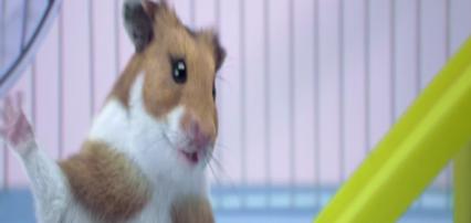 hamster-screen-1
