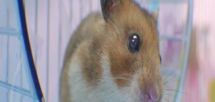 hamster-screen-3